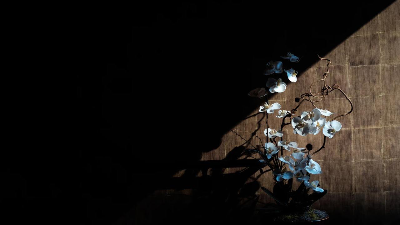 Dritëhijet e Çajupit