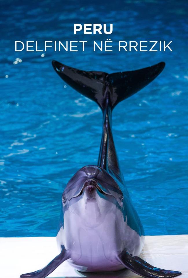 Peru delfinët në rrezik