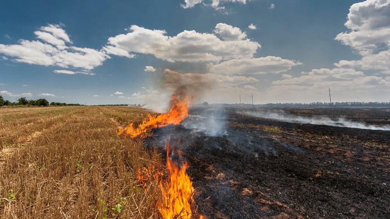 Zjarri në bujqësi-Pangolinët
