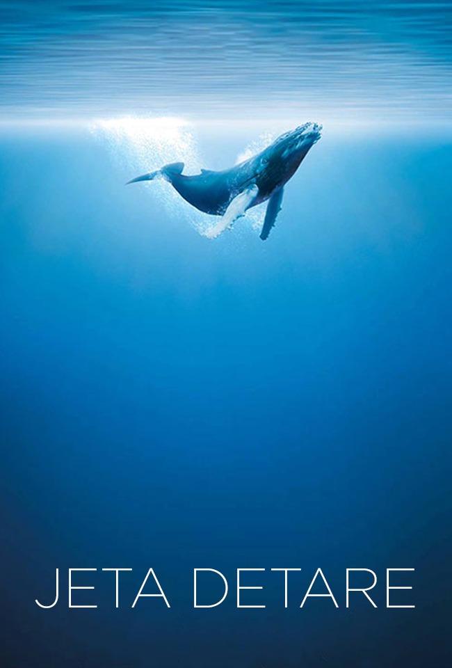 Jeta detare, Peshkaqenët e Adriatrikut, Akuariumet e balenat