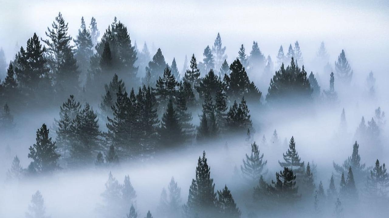 Bota e sekrete e Pemëve