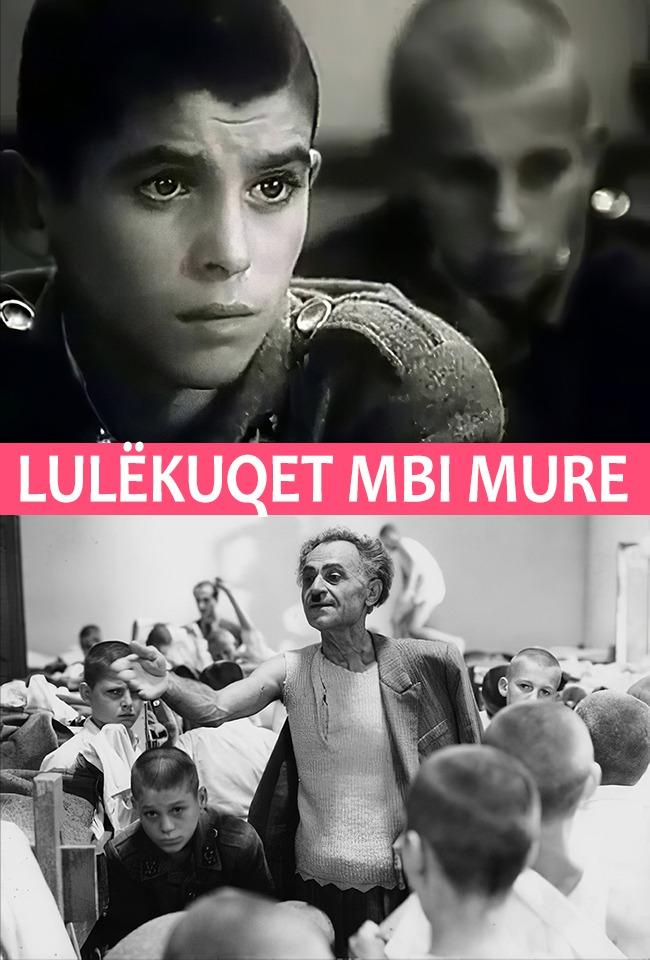 LULËKUQET MBI MURE