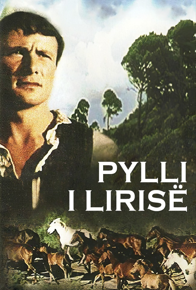 PYLLI I LIRISË